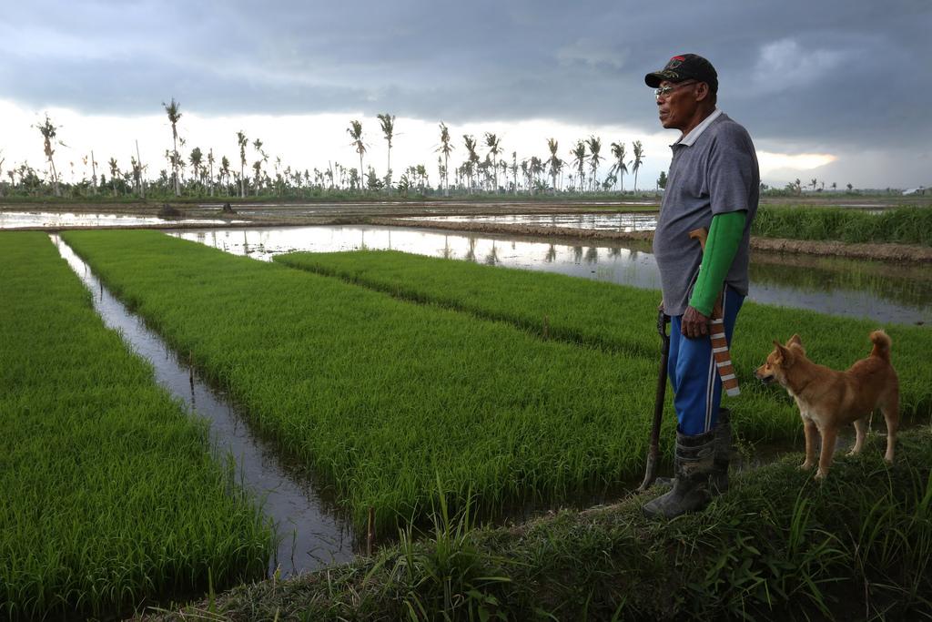 leyte paddy fields